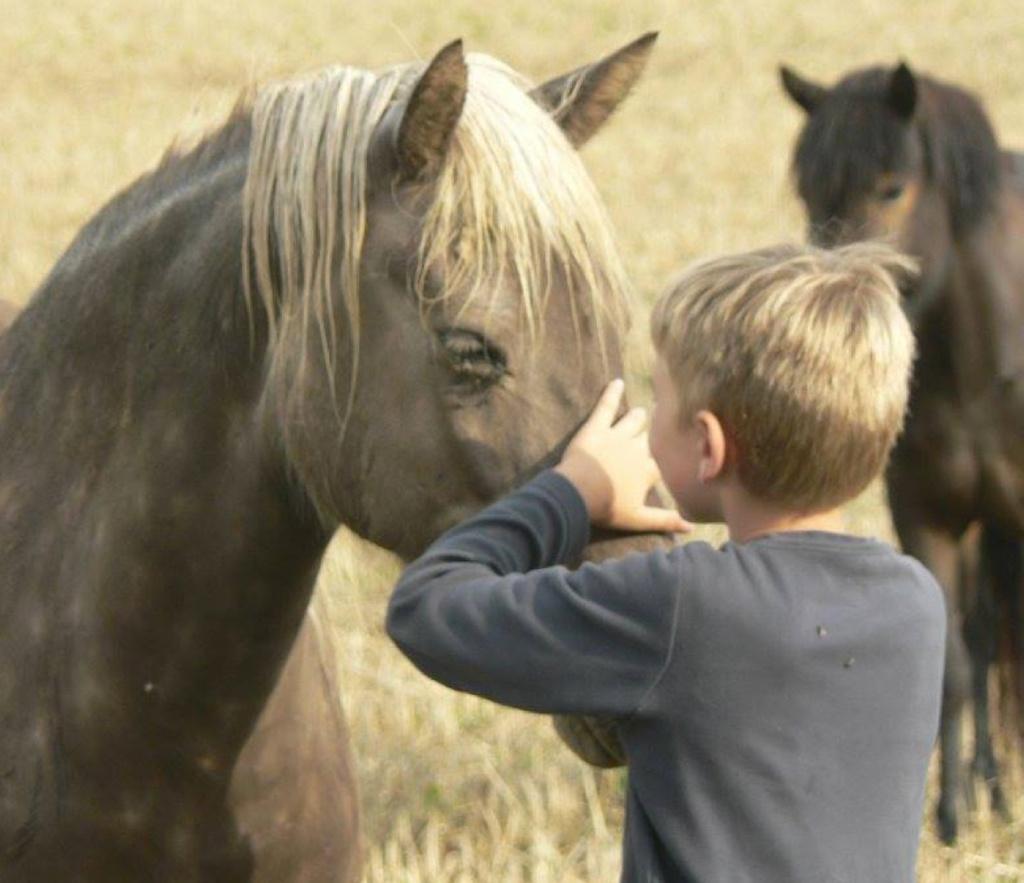 Ponykampen - Kinderkampen